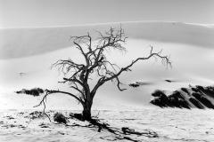 pustynya-Namibii