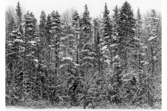 stena-lesa